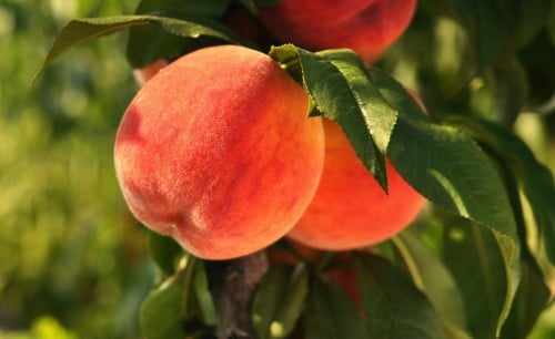 peach kernel plant oil in Beatitude products